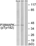 A7179-1 - MAP kinase p38 alpha / MAPK14