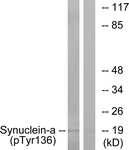 A7236-1 - Alpha-Synuclein / SNCA