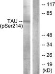 A7237-1 - MAPT / TAU
