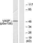 A7249-1 - VASP