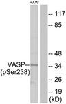 A7250-1 - VASP