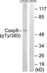 A8011-1 - Caspase-8 / FLICE