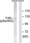 A8032-1 - FAK1 / PTK2