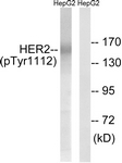 A8039-1 - CD340 / ERBB2 / HER2