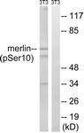 A8046-1 - Merlin