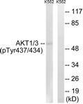 A8076-1 - AKT1 / PKB