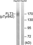 A8107-1 - CD135 / FLT3