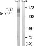 A8108-1 - CD135 / FLT3