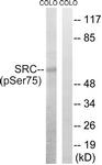 A8186-1 - SRC1
