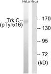 A8196-1 - TrkC