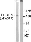 A8210-1 - CD140a / PDGFRA