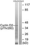 A8336-1 - Cyclin D2