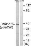 A8372-1 - DUSP1 / MKP1