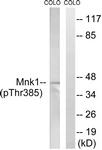 A8376-1 - MKNK1