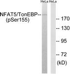A8386-1 - NFAT5