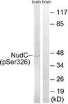 A8388-1 - NUDC