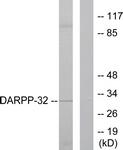 B0007-1 - DARPP32