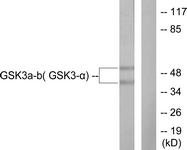 B0012-1 - GSK3 alpha
