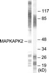 B0018-1 - MAPKAP Kinase-2