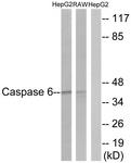 B0058-1 - Caspase-6