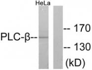 B0078-1 - PLCB3