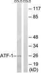 B0411-1 - ATF1