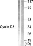 B0418-1 - Cyclin D3