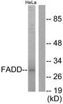 B0425-1 - FADD