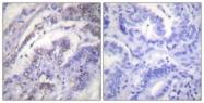 B0434-1 - Histone H3.1