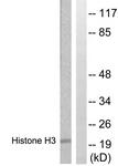 B0435-1 - Histone H3.1
