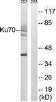 B0449-1 - XRCC6 / Ku70
