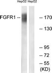 B0480-1 - FGFR1
