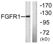 B0481-1 - FGFR1