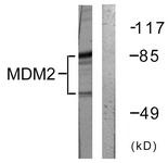 B0508-1 - MDM2