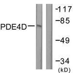 B0543-1 - PDE4D