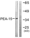 B0545-1 - PEA15