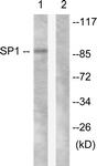 B0577-1 - SP1 / TSFP1