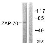 B0600-1 - ZAP70