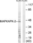 B0677-1 - MAPKAP Kinase-2