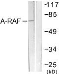 B0770-1 - ARAF