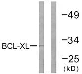 B0775-1 - Bcl-2-like 1