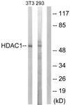 B0793-1 - HDAC1