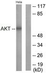 B0817-1 - AKT1 / PKB
