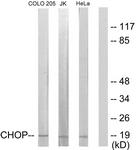 B0863-1 - GADD153 / CHOP