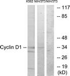 B0879-1 - Cyclin D1