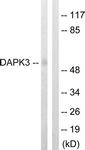 B0900-1 - DAPK3 / ZIPK