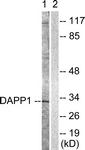 B0901-1 - DAPP1