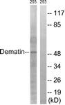 B0904-1 - Dematin