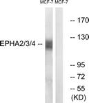 B0914-1 - EPHA2 / ECK