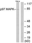 B0919-1 - MAPK6 / ERK3